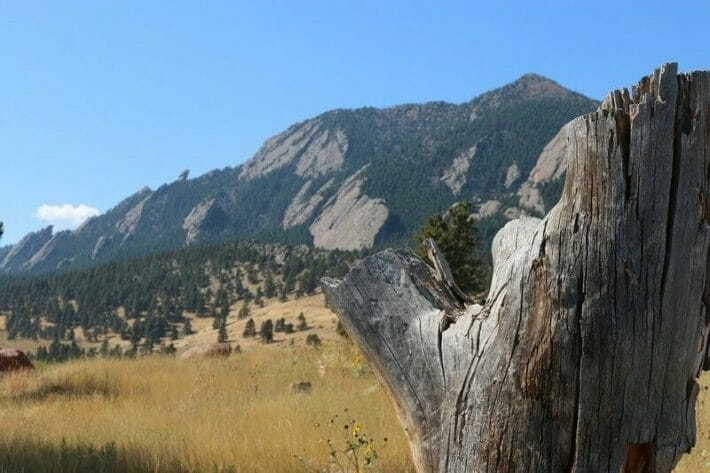 Yellow field grass, pine trees and Boulder's flatirons; old, rotting tree trunk in the foreground