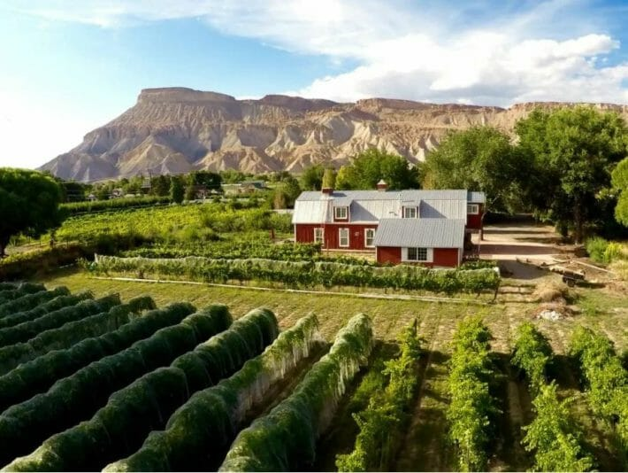 red barnhouse sits on a vineyard with mountains in the background
